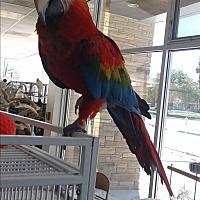 Adopt A Pet :: Corky - Villa Park, IL