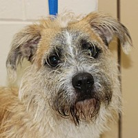 Adopt A Pet :: 25563 - Cole - Ellicott City, MD