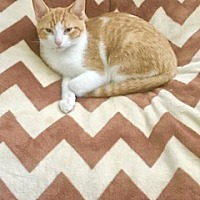 Adopt A Pet :: Carlyle - Murfreesboro, NC