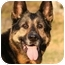 Photo 1 - German Shepherd Dog Dog for adoption in Wayland, Massachusetts - Tasha
