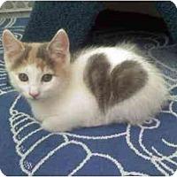 Adopt A Pet :: LoveBug - Howell, NJ