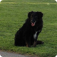 Adopt A Pet :: Duke - Westbank, BC