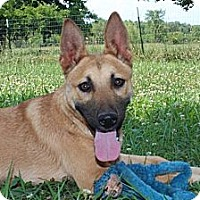 Adopt A Pet :: Elvis--Reduced fee $300 - Allentown, PA