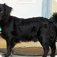 Adopt A Pet :: Nina - La Habra Heights, CA