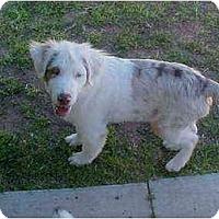 Adopt A Pet :: Mike - Mesa, AZ