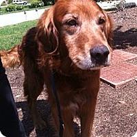 Adopt A Pet :: Rusty - New Canaan, CT