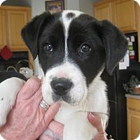 Adopt A Pet :: Ricky - ADOPTION PENDING - Albany, NY