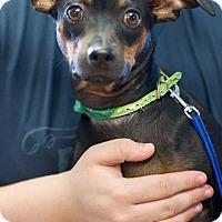 Adopt A Pet :: Cain - Marietta, GA