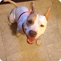 Adopt A Pet :: tonto - Wanaque, NJ
