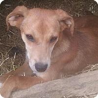Adopt A Pet :: Lucky - Hagerstown, MD