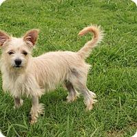 Adopt A Pet :: Buttercup - Newark, NJ