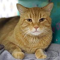 Adopt A Pet :: Mr. Orange - Tucson, AZ