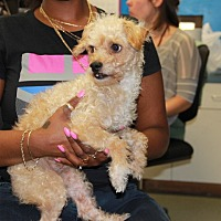 Adopt A Pet :: Willy - Greensboro, NC