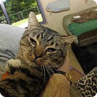 Adopt A Pet :: THOR - Pittsburgh, PA