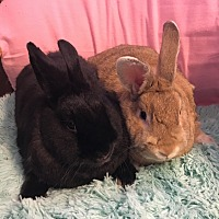 Other/Unknown Mix for adoption in Idaho Falls, Idaho - Faline and Michelle