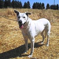 Adopt A Pet :: Sophie - Pleasant Grove, CA