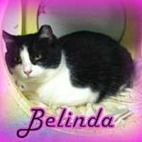 Adopt A Pet :: Belinda - Harleysville, PA