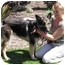 Photo 2 - German Shepherd Dog Dog for adoption in San Diego, California - Nikki