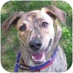 Terrier (Unknown Type, Medium)/Hound (Unknown Type) Mix Dog for adoption in Eatontown, New Jersey - Sweet Pea