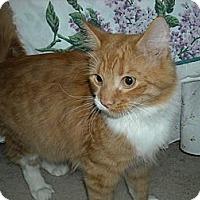 Adopt A Pet :: Bo & Luke - Arlington, VA