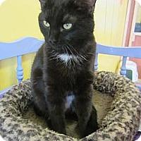 Adopt A Pet :: Snicket - Mobile, AL