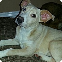 Adopt A Pet :: Heidi (ADOPTED!) - Chicago, IL