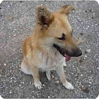Adopt A Pet :: Toby - Pointblank, TX