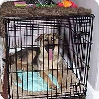 Adopt A Pet :: Thor - Evansville, IN