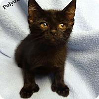 Adopt A Pet :: Ester Ann - Bentonville, AR