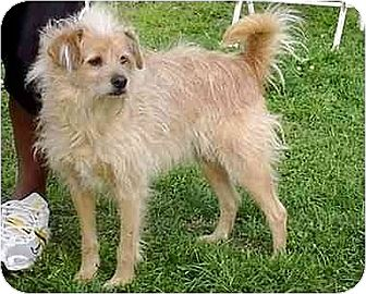 Terrier (Unknown Type, Medium) Mix Dog for adoption in Downey, California - Sandy