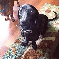 Adopt A Pet :: Oskar - Greenville, SC