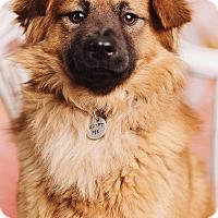 Adopt A Pet :: Herbert - Portland, OR