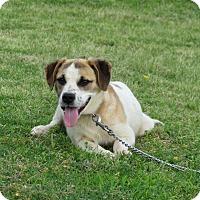 Adopt A Pet :: LEAH - Bedminster, NJ