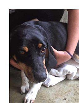 Beagle/Hound (Unknown Type) Mix Dog for adoption in Foristell, Missouri - Charlie