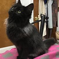 Adopt A Pet :: Mitzy - DFW Metroplex, TX
