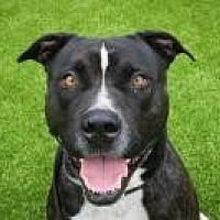 Adopt A Pet :: Phantom - West Palm Beach, FL