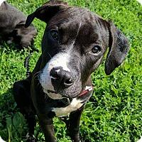 Adopt A Pet :: Thriller - Lisbon, OH
