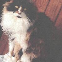 Adopt A Pet :: Isabel - Calimesa, CA