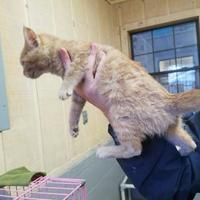 Adopt A Pet :: Anastasia - Amory, MS