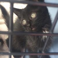 Adopt A Pet :: Tarzan - Richmond, VA