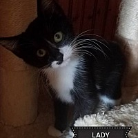 Adopt A Pet :: Lady - Toms River, NJ
