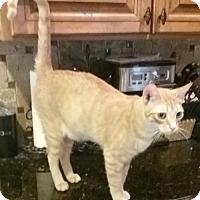 Adopt A Pet :: Blaze - Glendale, AZ