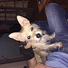 Adopt A Pet :: Jet (COURTESY POST)