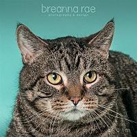 Domestic Shorthair Cat for adoption in Sheboygan, Wisconsin - Budda