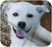 Husky Mix Puppy for adoption in Portland, Maine - Lake