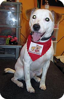Jack Russell Terrier Mix Dog for adoption in Welland, Ontario - Buzz