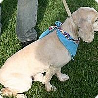 Adopt A Pet :: CHANCE - Toluca Lake, CA