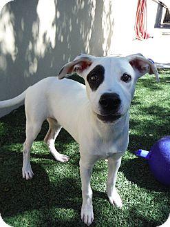 Shepherd (Unknown Type) Mix Dog for adoption in Dublin, California - Jess