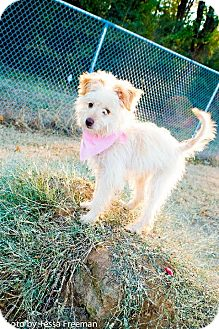 Terrier (Unknown Type, Small)/Poodle (Miniature) Mix Puppy for adoption in Muldrow, Oklahoma - Maggie