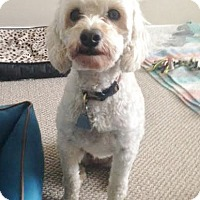 Adopt A Pet :: Prinny - Adopted October 2015 - Huntsville, ON